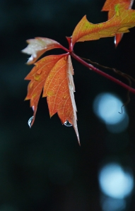 D 8 Ősz