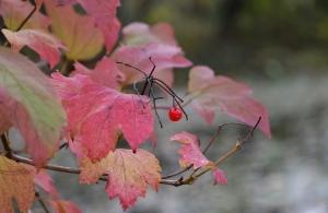 D 9 Őszi színek