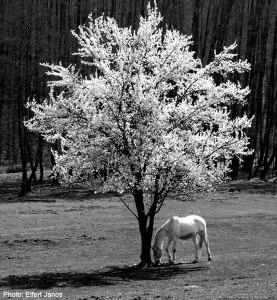 01-Tavasz-Újjászületés_Photo Eifert