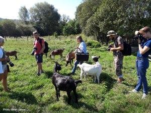2016-08-28-valkonya-kecskeket-fenykepezunk-az-okogazdasagban