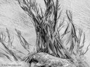 dr-siman-laszlo_grafika-a-dunen_pigmenta-art-print-lab-kulondija
